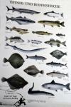 Fischplakat Ostsee und Boddenfische