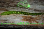 Paladin - Seeringelwurm mit Aroma Gummiköder - Barsch Flundern Schollen Forellen Ostsee Bodden Bodensee Norwegen