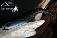 BERKLEY POWERBAIT RIPPLE SHAD ca.11cm Natural