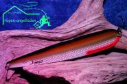 Grizzly Big Salmon -35- Br.Si.  150 mm Trollinglöffel -Trollingblinker - Schleppblinker