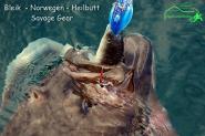 Savage Gear Real Eel 40cm Version: 147g + 7g; 1 Körper + 1 Bleikopf + 1 Stinger - Heilbutt Norwegen Island